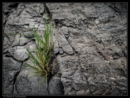 Wild grass on rock