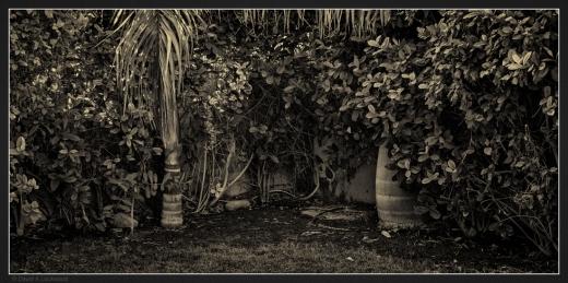 garden-corner