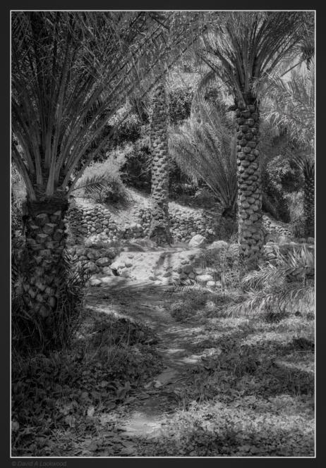 palm-garden-no2