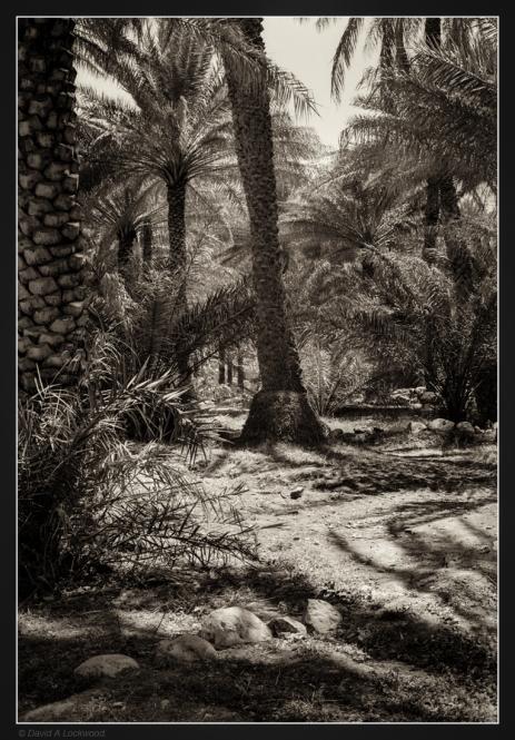 palm-garden