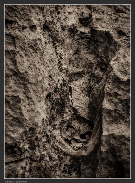 Rock detail.