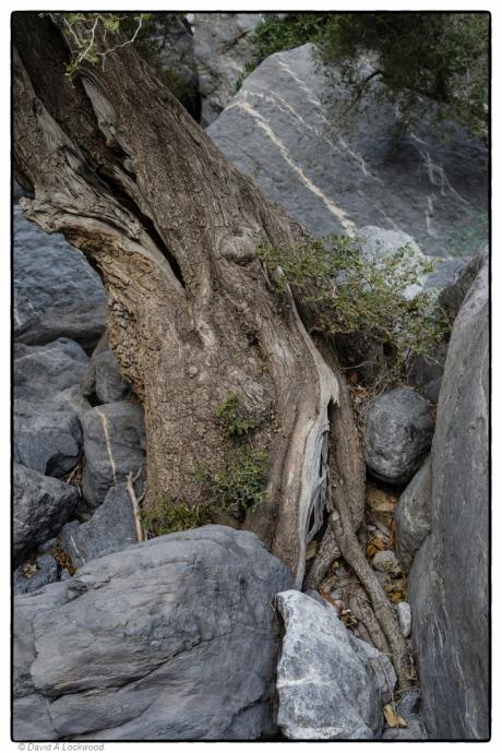 tree-rocks