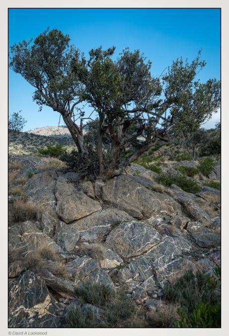 wild-olive-rocks