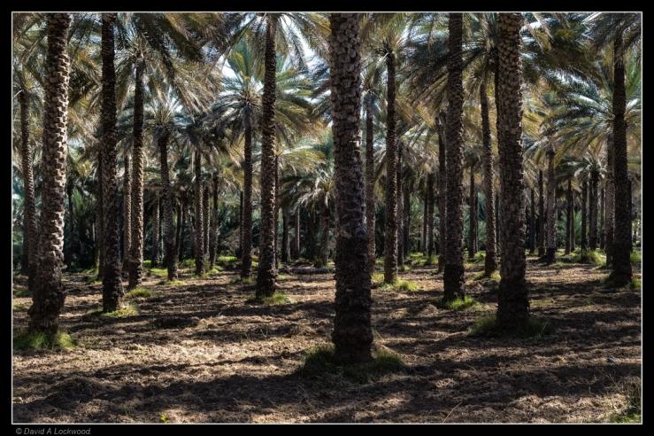birkat-al-mouz-no3