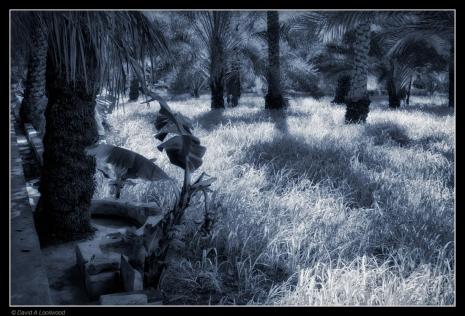 grass-palms