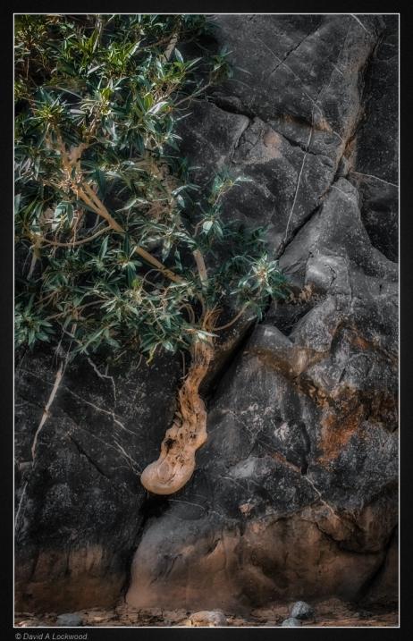 Bush-rocks-diffused