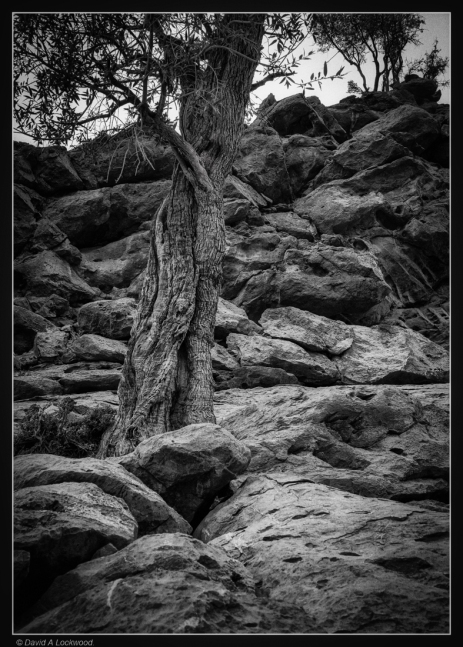 Tree & rocks-no2-Shams