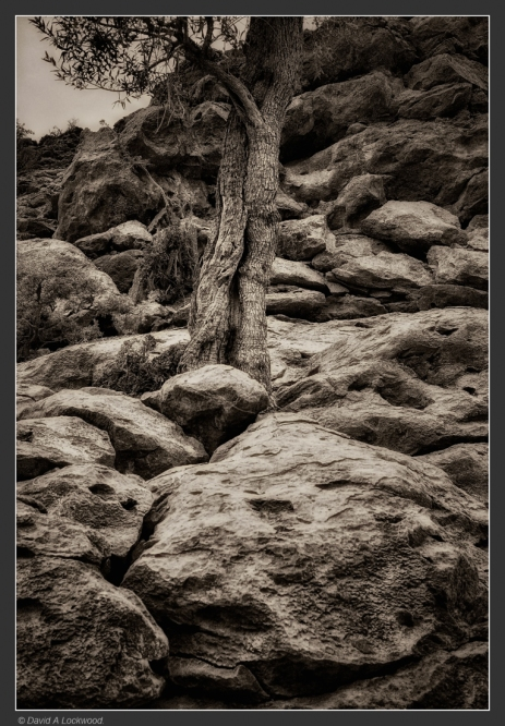 tree-rocks-no3-shams
