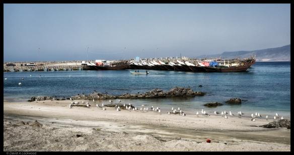 Mirbat No7 - Dhofar