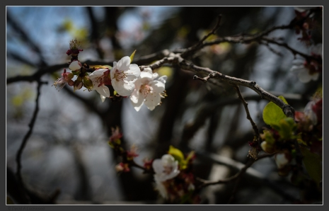 A Flower - Wakan.