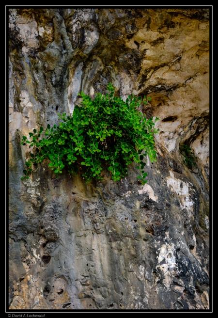 Plant on rock.