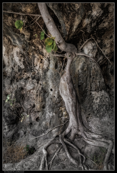 Tree roots over rock.