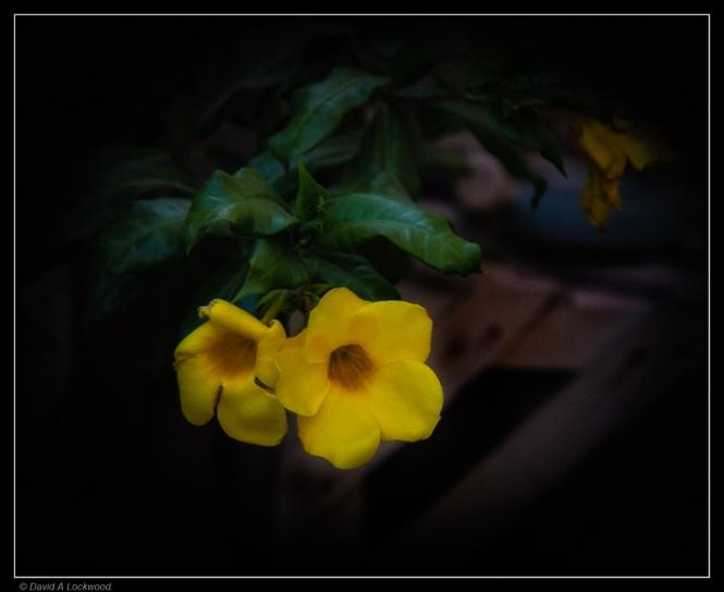 Garden flower.