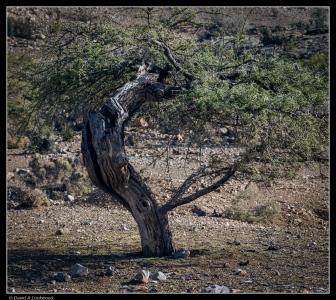 Bent & twisted tree