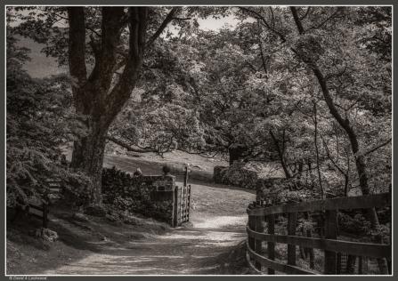 Country walk No1